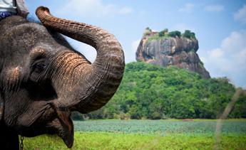éléphants-sri-lanka-liste
