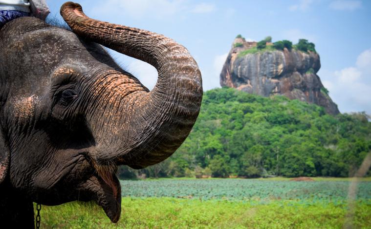éléphants-sri-lanka-slide