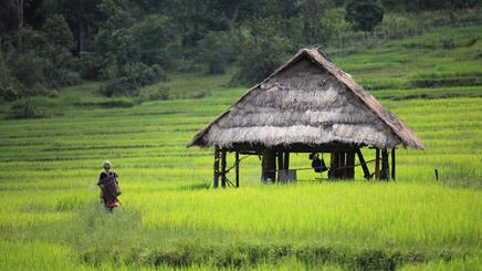 Cambodge-Riziere_Verdoyante