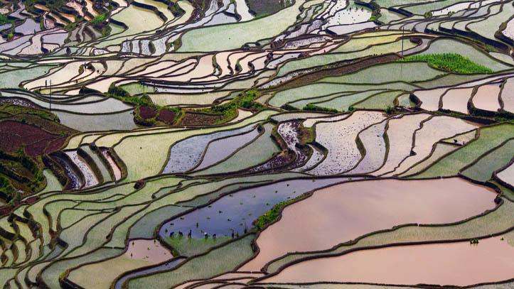 chine yunnan riz culture