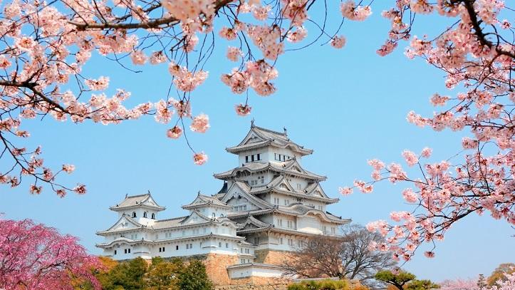 Himeji Chateau cerisiers sakura Japon