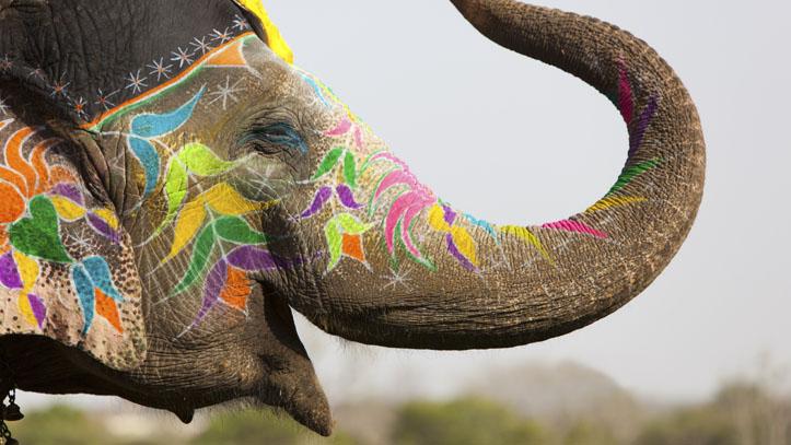 Festival des couleurs inde