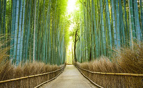 Bambouseraie d'Arashiyama dans l'ouest de Kyoto