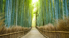 Kyoto-Bambouseraie-Arashiyama