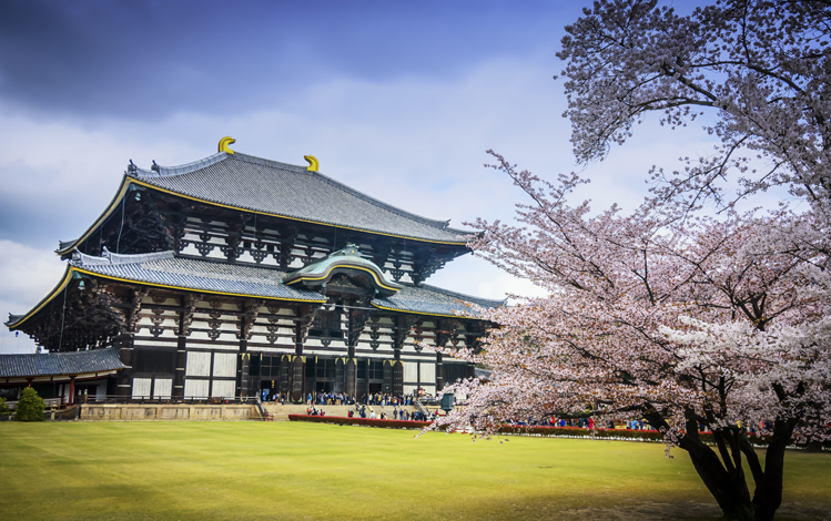 Nara-temple-Todaji-cerisiers-upload
