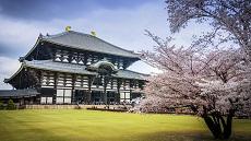 Nara-temple-Todaji-cerisiers