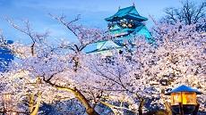 Osaka-cerisiers-château