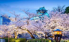 Cerisiers du château d'Osaka