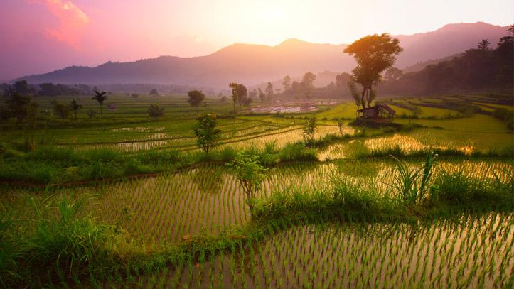 Sidemen terrasses riz bali indonésie