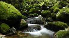 Forêt de l'île de Yaskushima