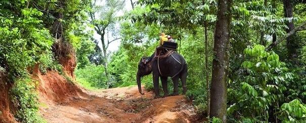 Elephant Birmanie