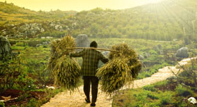 Agriculteur Vietnam