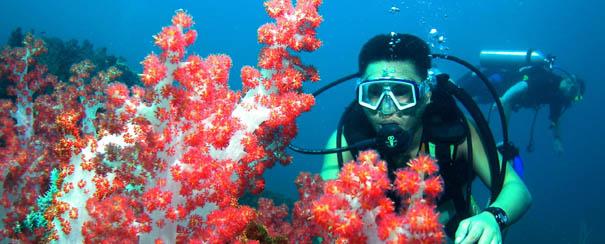 Plongee dans les fonds marins de Borneo