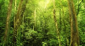 Parc national de Kota Kinabalu