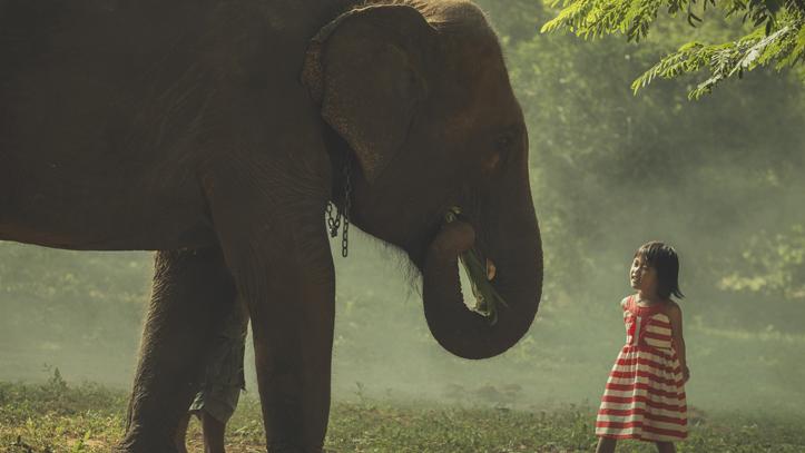 Cambodge elephant filles