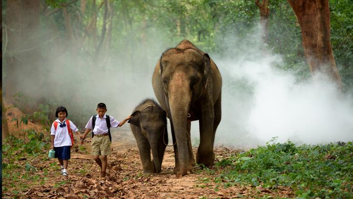 Cambodge enfant elephants