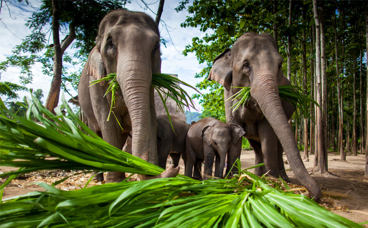 elephant-camp-thailande