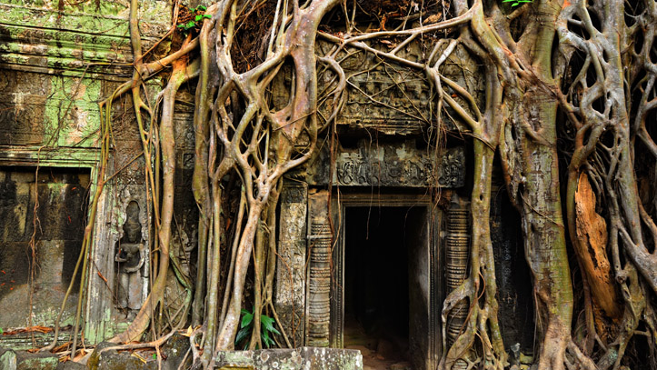 entree temple ta phrom couvert racines cambodge