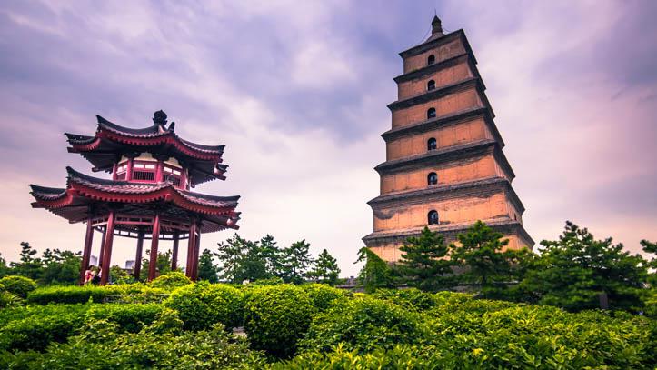 grande pagode oie sauvage