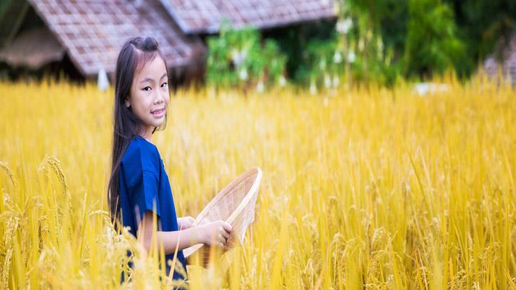Indonésie rizière