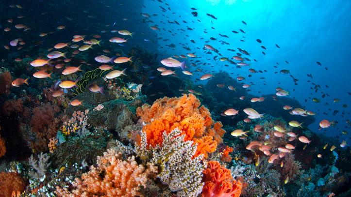 Indonesie plongée poissons