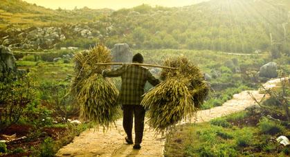 Minorité agriculteur récolte Vietnam