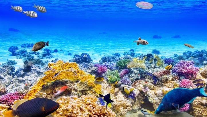 Philippines fond marin corails poissons