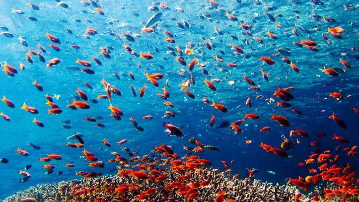 Koh samui plongee en thailande