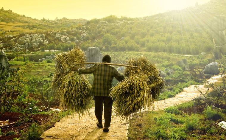 porteur-riz-vietnam