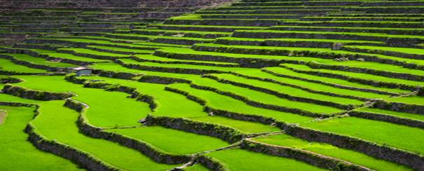 Rizières en terrasses aux Philippines