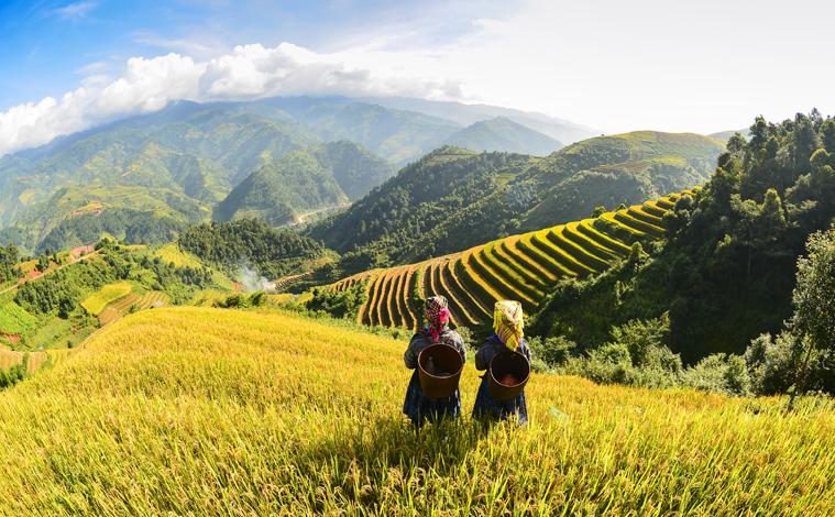 riziere-panorama-nord-vietnam