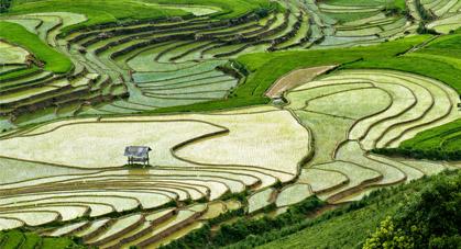 Rizières aux Vietnam