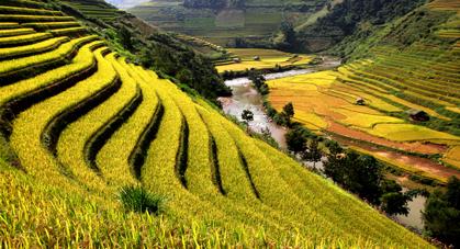 Rizières en terrasse Yunnan Chine