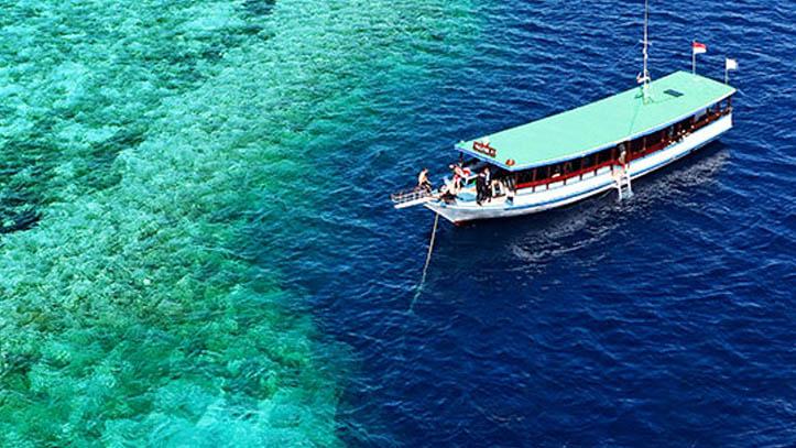 Bateau wakatobi dive resort