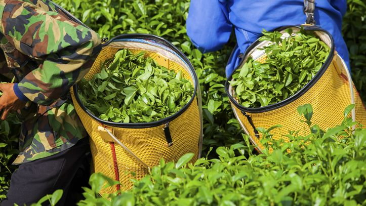 srilanka-plantations-thé-liste