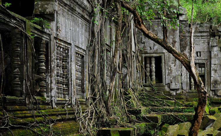 temple-angkor-arbre-cambodge