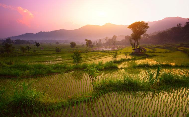 terasses-rizieres-bali-indonesie