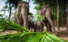 Thailande elephant liste