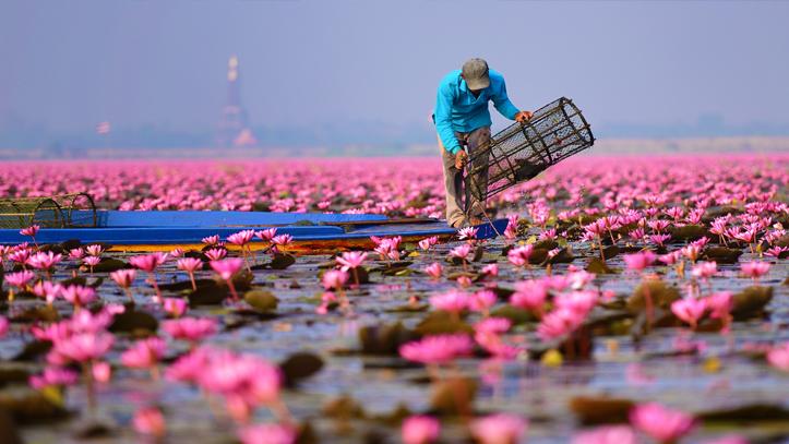 Thailande udon thani nong han lac lotus