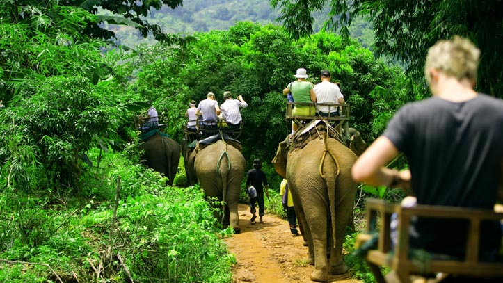elephants thailande