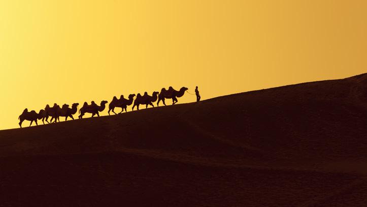 Traversée la route de la soie en chameau