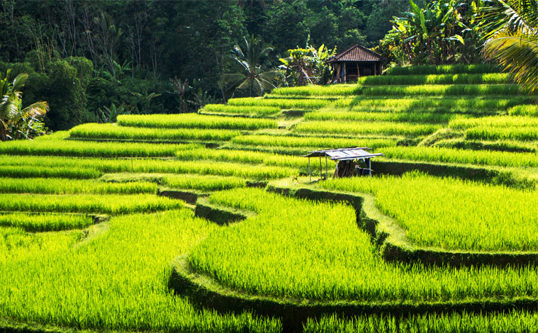 ubud-indonesie-rice-fields