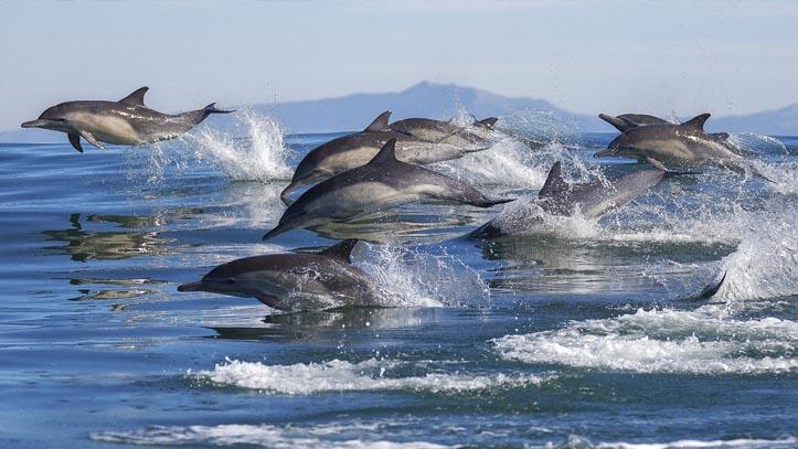 USA Bahamas dauphins mer