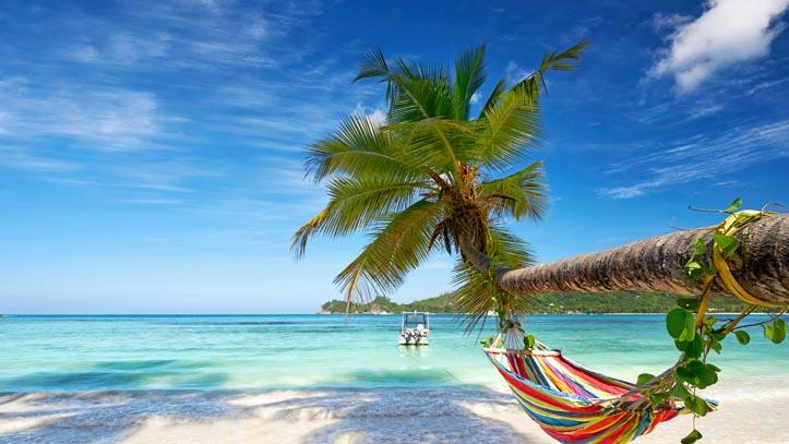 USA Bahamas plage palmier