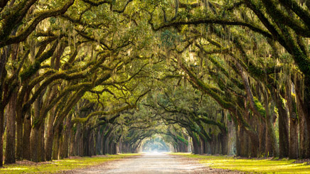Plantation Cajun Oak Alley
