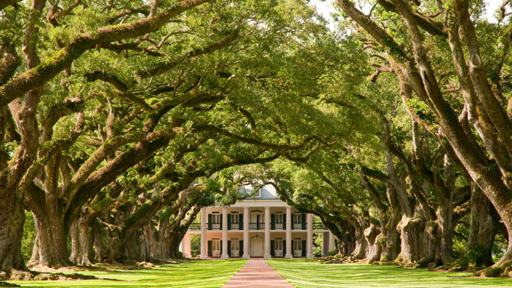Louisiane plantation Oak Alleys