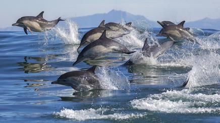 Santa Barbara plage baleines