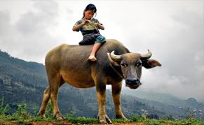Vietnam Buffalo liste
