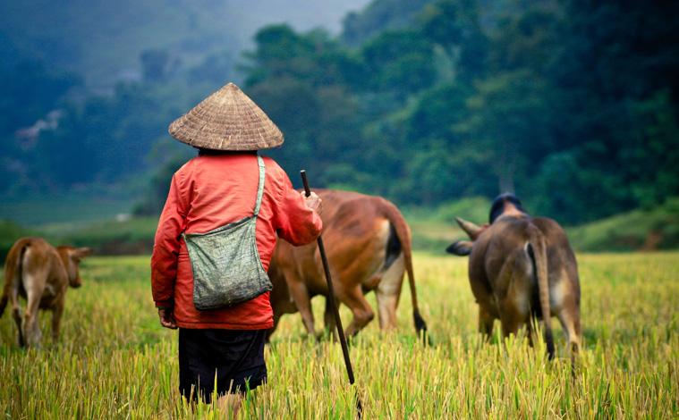 vietnam-lointain-minorités