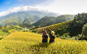 Vietnam Nord terrace riz liste